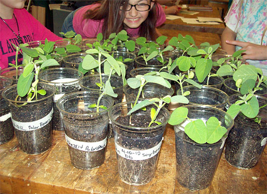 Soybeans grown by Warrior Run Middle School students